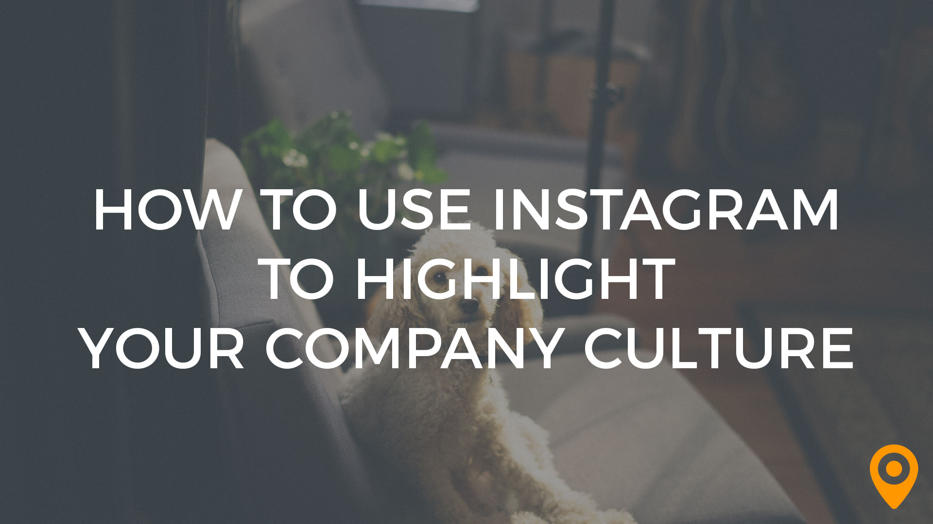 use instagram to highlight company culture